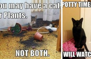 funniest things cats do feat