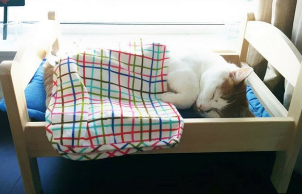 ikea donated doll beds to cats feat