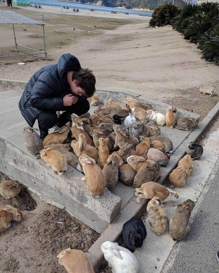 okunoshima rabbit island 3 (1)