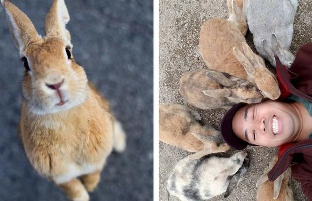 Okunoshima Rabbit Island Feat