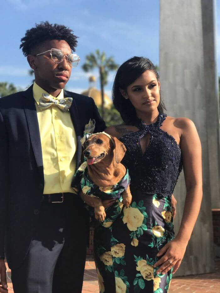 Brenda Sierra dachshund matching prom dress 7