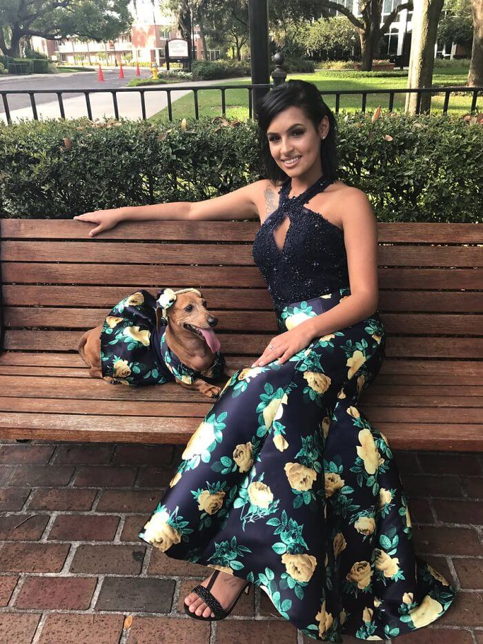 Brenda Sierra dachshund matching prom dress