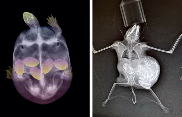23 Stunning Animal Pregnant X Rays That Are Both Adorable And Scary