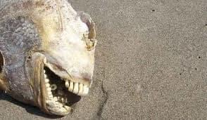animals with human teeth 21