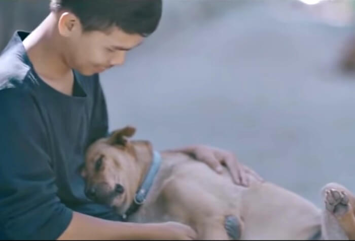 boy hugs stray dogs in thailand 4