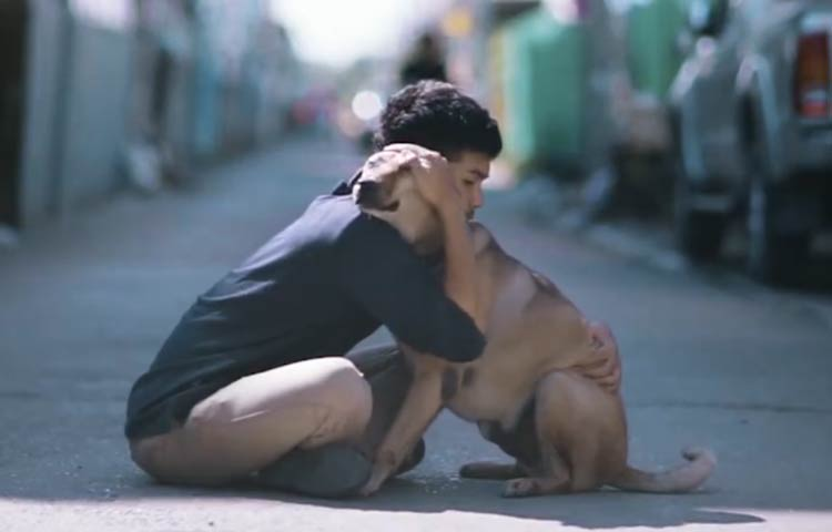 boy hugs stray dogs in thailand