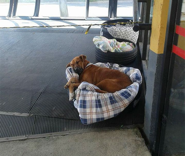 bus station opens doors for stray dogs 4