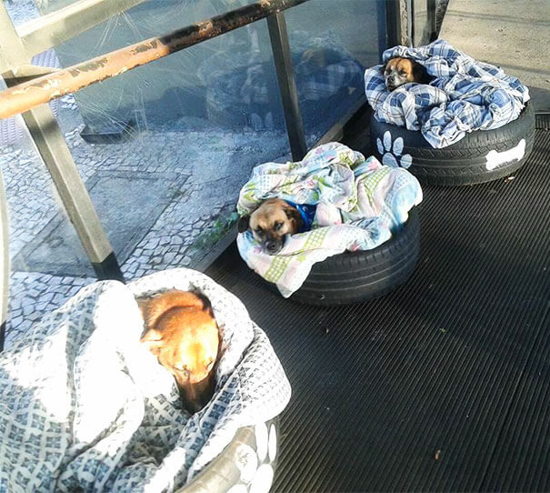 bus station opens doors for stray dogs