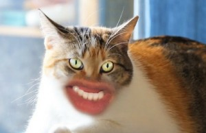 cats with human mouths feat