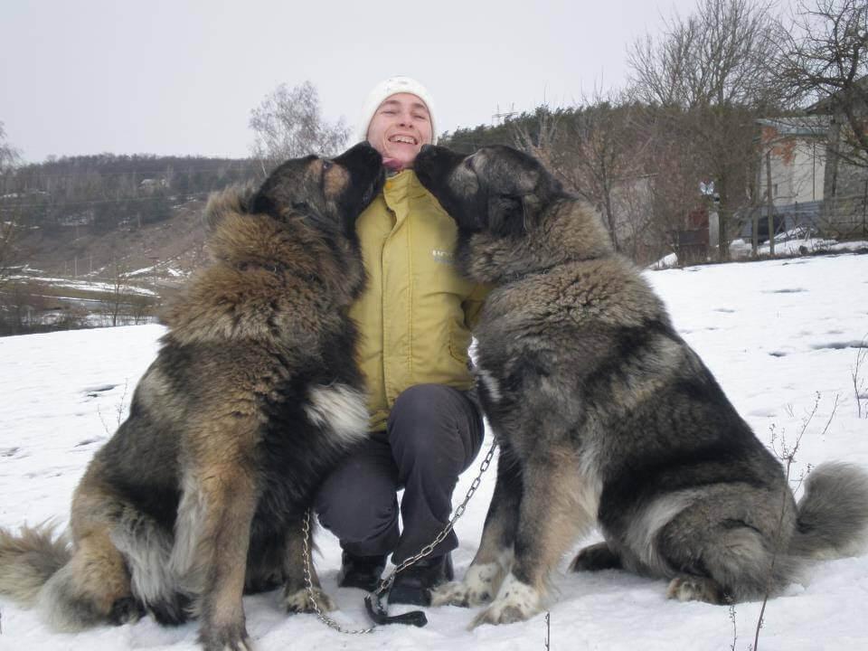 Caucasian Shepherd dog 5