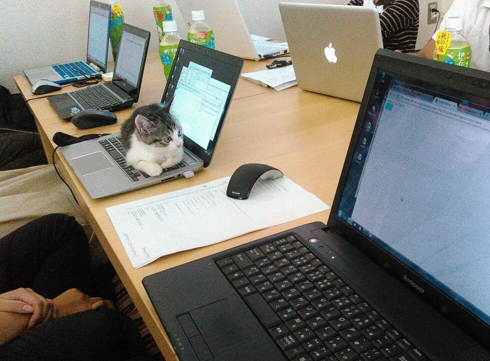 company pays employees for every cat they rescue 2