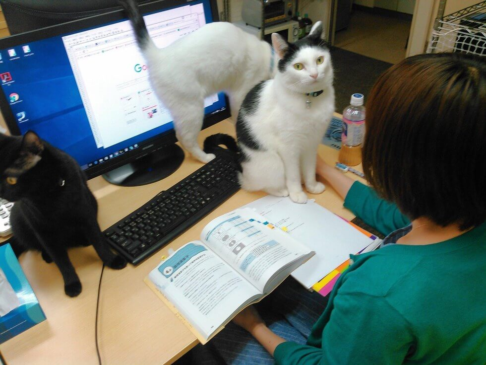 company pays employees for every cat they rescue 9