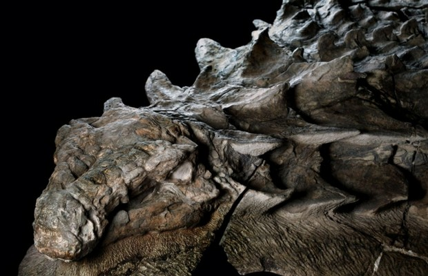 dinosaur fossil feat (1)