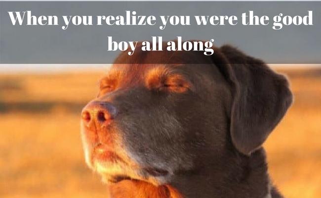 dog memes feat