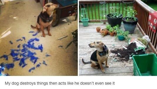 dog memes100