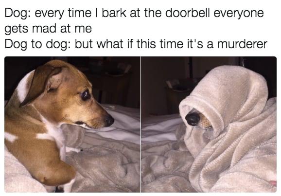 dog memes11