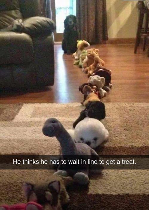 dog memes15