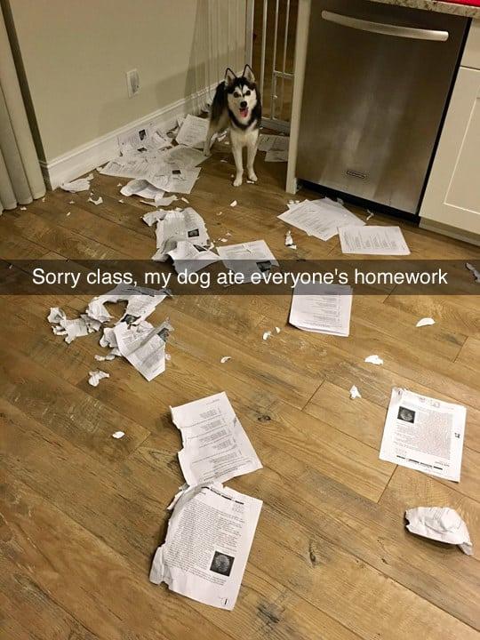 dog memes17