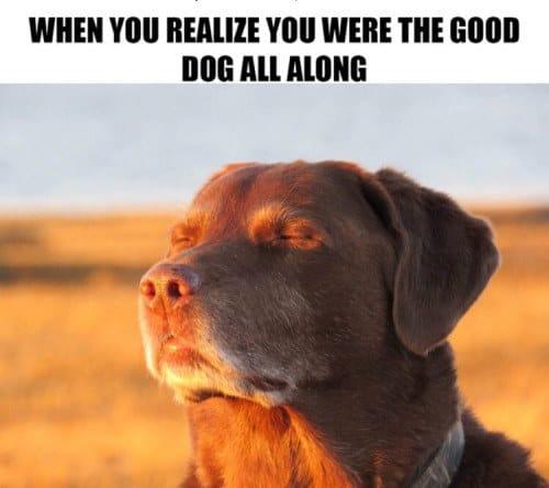 When You Re Always A Good Boy Dog