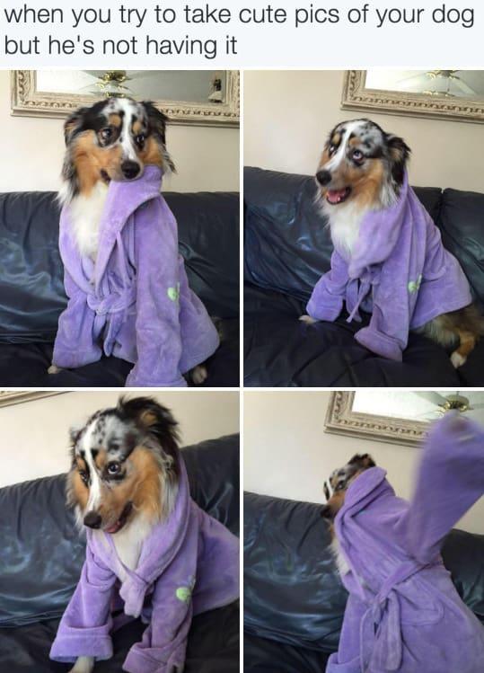 dog memes21