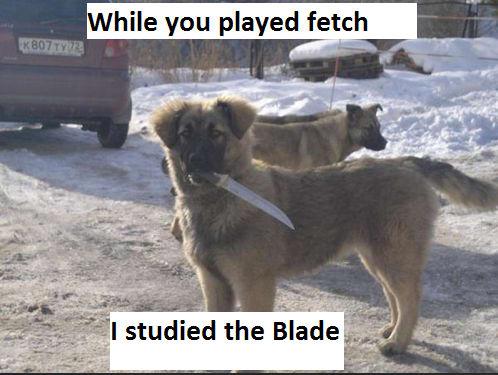 dog memes22