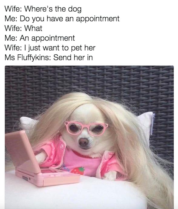 dog memes24