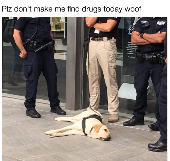 dog memes27