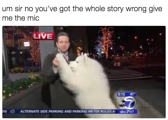 dog memes28