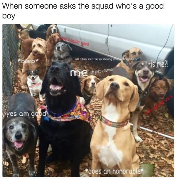 dog memes29