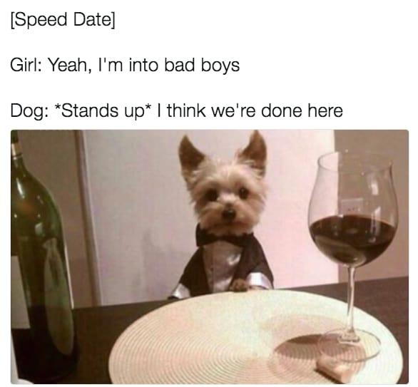 dog memes3