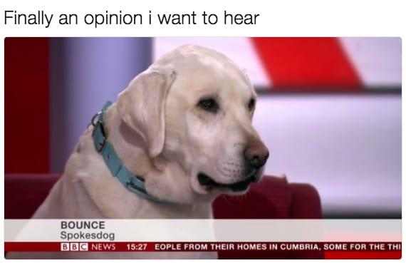 dog memes30