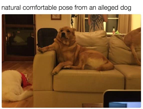 dog memes33