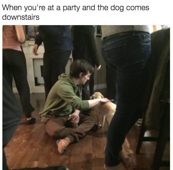 dog memes35