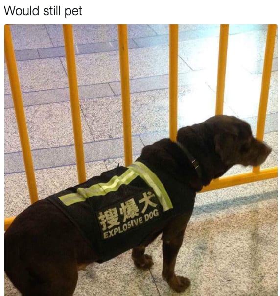 dog memes36