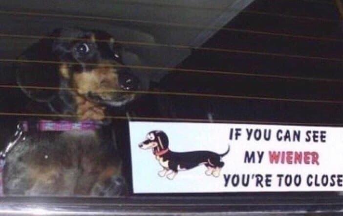 dog memes39