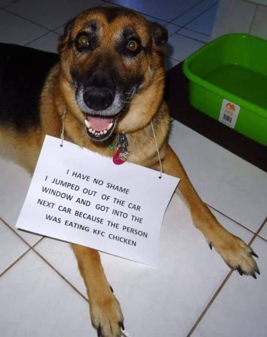 dog memes4