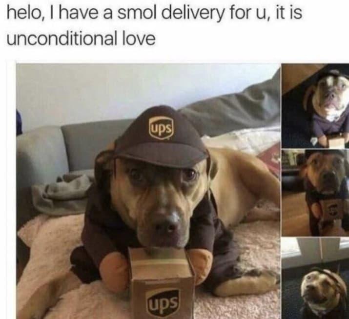 dog memes41