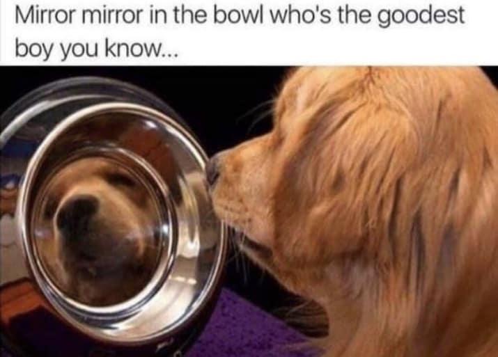 dog memes42