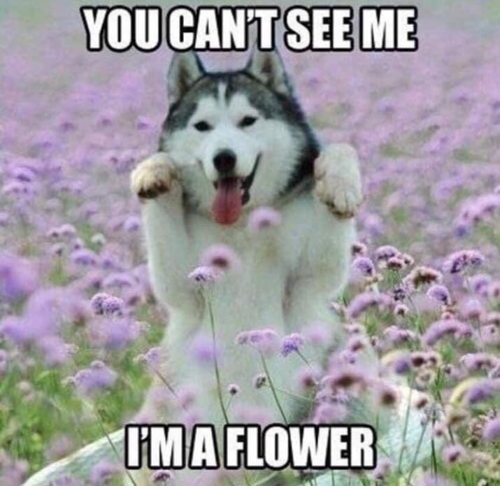 dog memes43