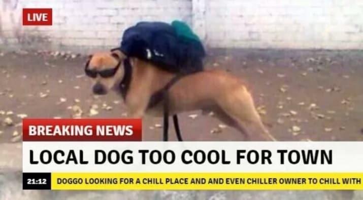 dog memes44