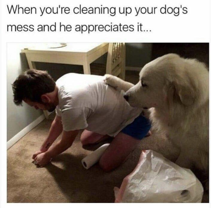 dog memes45