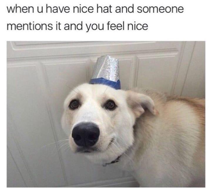 dog memes47
