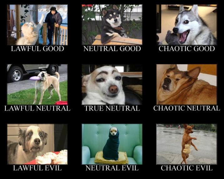 dog memes48