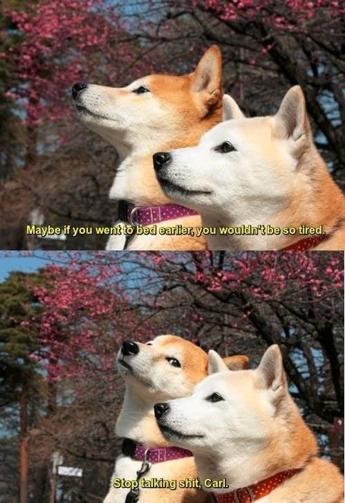 dog memes5