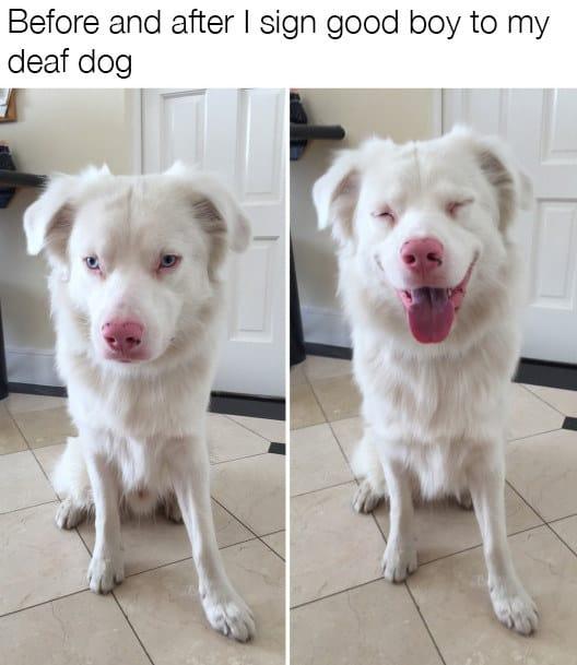 dog memes50
