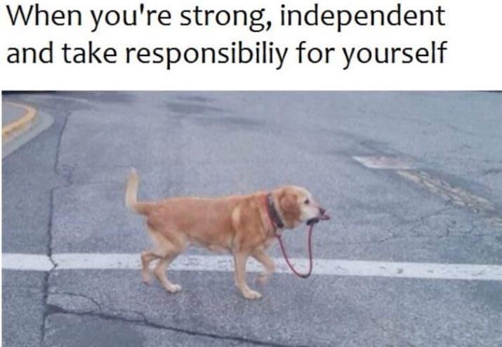 dog memes51
