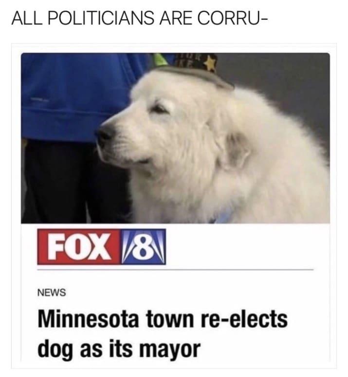dog memes52