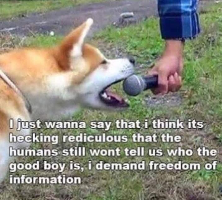 dog memes54