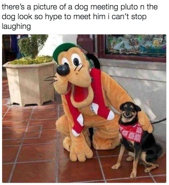 dog memes55