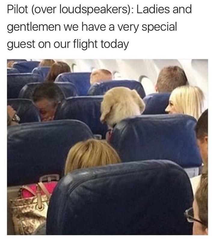 dog memes57
